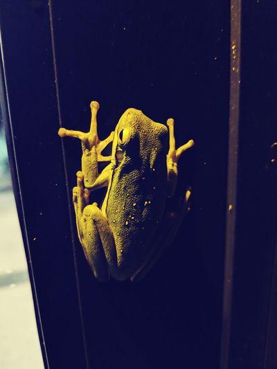Frog Night