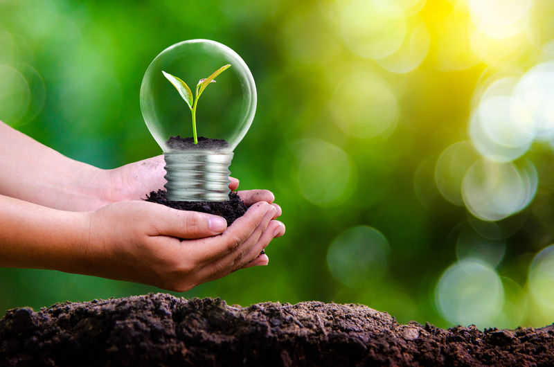 Close-up of hand holding light bulb with seedling