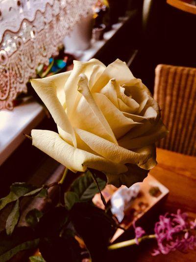 Freshness Rose - Flower Petal Table