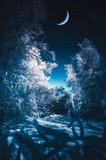 Arctic fantasy Tree Nature No People Beauty In Nature Winter Snow Tranquility Cold Temperature Scenics - Nature Outdoors Night Forest Blue Sky Crescent Moon Moonlight Arctic Fantasy Blue Sky Star - Space Low Angle View Landscape Landscape_Collection Nightphotography Nature_collection Nature Photography Frost Frozen Scenics Freshness Abstract Art Wall Art Backgrounds Astronomy Stars Taking Photos Close-up Photography Light And Shadow Bright Woods Lapland Finland White Color Hanging Out Check This Out Eye4photography  Explore Atmospheric Mood Calm Colors Light Abstract Photography Art Photography Photo Editing Lightroom EyeEm Best Shots EyeEm Nature Lover