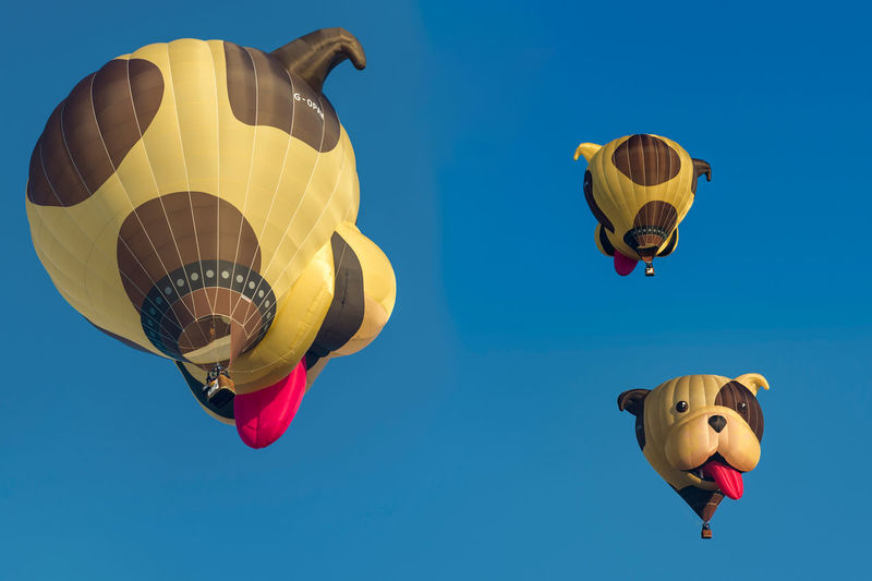 Hot air balloon special shape of a dogs head. 3 pictures in one. warstein international montgolfiade