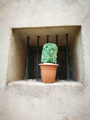 I WANNA BE FREE Potted Plant Plant Building Exterior Freshness Capturedonp9 Detodounpoco Inspiration Is Every Where Time To Relax HuaweiP9 Culture And Tradition Textured  Cultural Heritage Art Is Everywhere