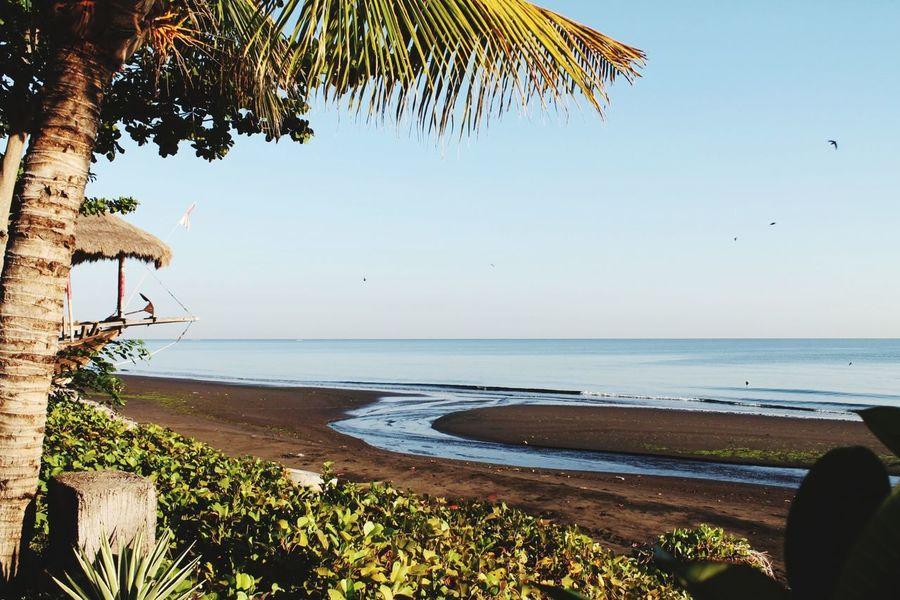 EyeEm Selects Tree Water Sea Palm Tree Clear Sky Beach Sand Luxury Hotel Tourist Resort Blue