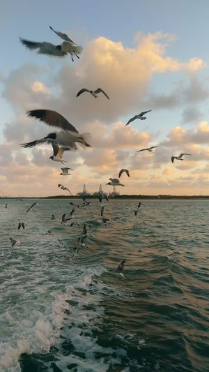 Premium Collection Ocean Bird Spread Wings Flying Sunset Sea Seagull Flock Of Birds Mid-air Silhouette Sea Bird Flapping Water Bird