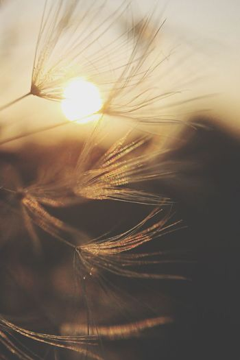 On a whim EyeEm Best Shots - Minimalist Macro EyeEm Best Shots - Nature EyeEm Best Shots - Sunsets + Sunrise