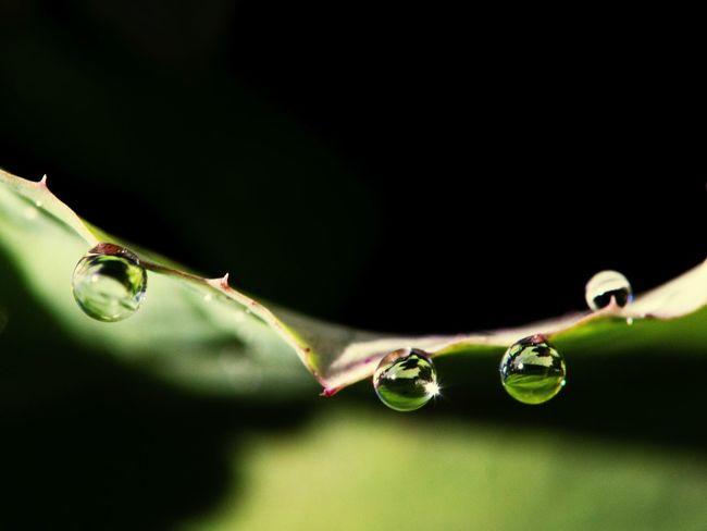 Water, macro,plante, goutte, eau, nature, garden, jardin, sphère, rosée,