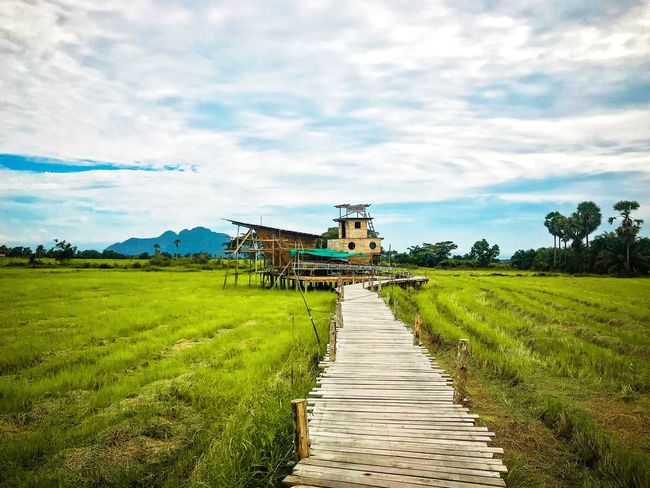 Sam Pao Thai Boat Relaxing Land Backgrounds Freshness Rice Field Travel Thailand Green Color ASIA Plant Sky Cloud - Sky Land Field Grass Nature Landscape Green Color Built Structure No People Tree Tranquility Environment Growth Scenics - Nature Tranquil Scene Day Beauty In Nature Architecture
