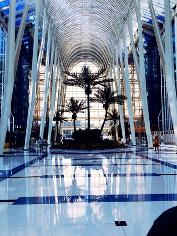 working Reflection Indoors  Ceiling Architecture Day Built Structure Real People Palm Tree Mammal