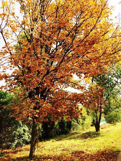 Осень 🍁🍂