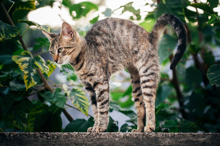 Stretching Animal Cat Cats Eye4photography  Mammal Pets Streetphotography