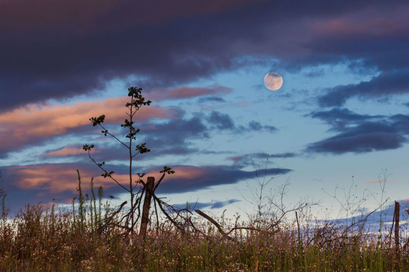 Beauty In Nature Cloud Cloud - Sky Cloudy Dramatic Sky Field Grass Growth Idyllic Landscape Moon Moonlight Nature No People Non-urban Scene Outdoors Plant Scenics Sky Sunset Tranquil Scene Tranquility Weather