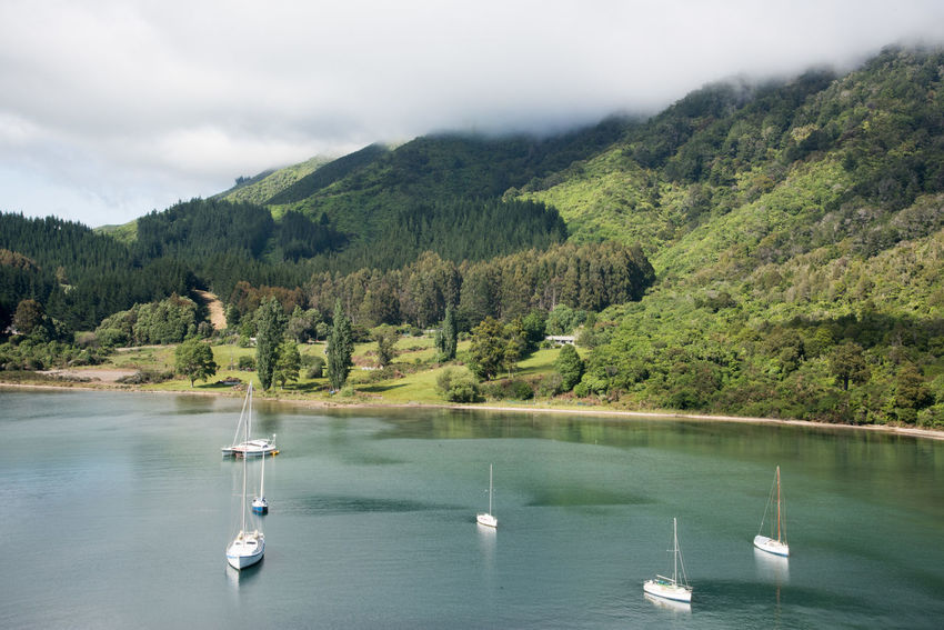 Picton,Marlborough/New Zealand-December 13,2016: Stunning, lush mountain landscape with nautical vessels anchored in the harbour under a blue sky with clouds in Picton, New Zealand Harbour Inlet Recreational Boat Traveling Anchored Bay Boat Lifestyles Luxury Marlborough Sounds Mode Of Transportation Mountain Nature Nautical Vessel New Zealand Picton  Sailboat Sailling Scenics - Nature Sky Transportation Travel Destinations Tree Water Waterfront