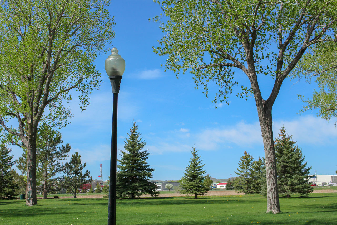 tree, plant, lighting equipment, street light, sky, nature, no people, day, growth, grass, street, park, green color, park - man made space, outdoors, tree trunk, trunk, blue, branch, low angle view, electric lamp