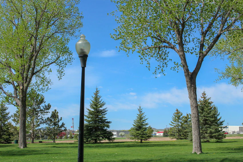 Dalbey Park in Gillette, Wyoming City Park Gillette, WY Grass Green Light Post Trees Wyoming Park Springtime Trees And Sky