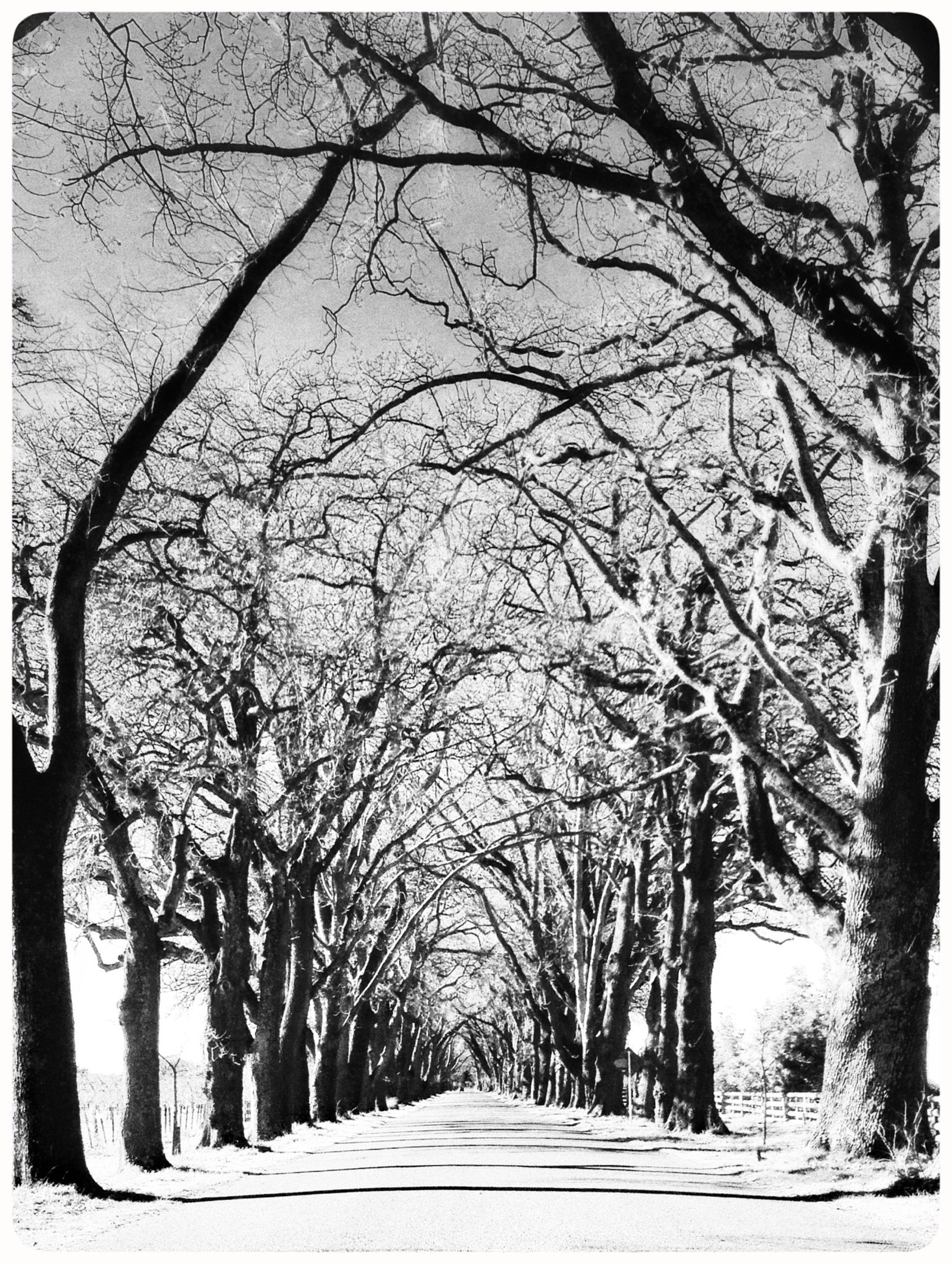 tree, the way forward, transfer print, bare tree, diminishing perspective, road, auto post production filter, branch, vanishing point, transportation, tranquility, nature, tranquil scene, treelined, tree trunk, empty, long, snow, empty road, winter
