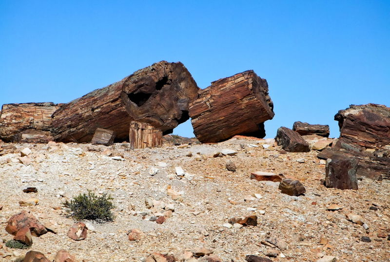 Clear Sky Day Desert Desert Around The World Fossil Geology Landscape Nature No People Outdoors Patagonia Patagonia Argentina Petrified Wood Rock - Object Rock Formation Scenics Stones Tree Trunks