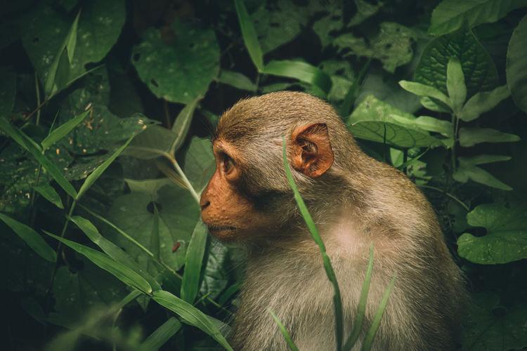 Close-up of monkey among thick foliage