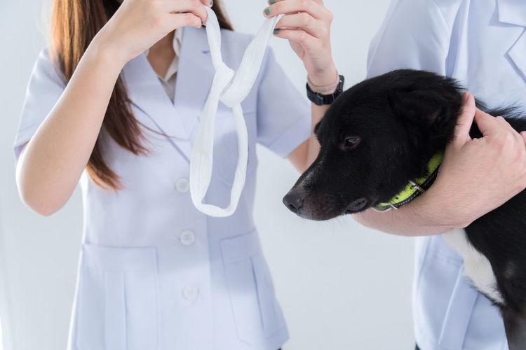 veterinary have