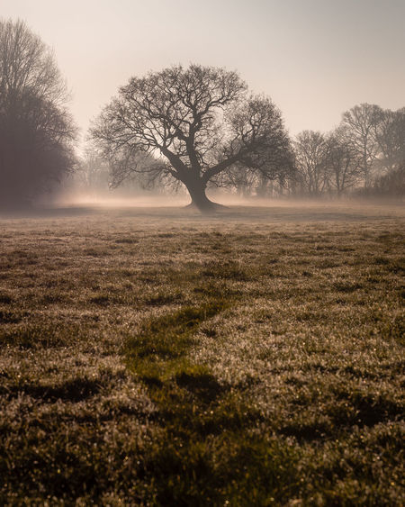 tree in the mist Tree Plant Beauty In Nature Bare Tree Tranquility Tranquil Scene Landscape Field Sky Land Environment Fog Scenics - Nature Non-urban Scene No People Nature Remote Solitude Growth Outdoors Isolated Hazy