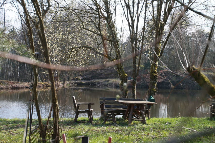 Bare Tree Beauty In Nature Bench Branch Day Grass Growth Lake Lakeshore Nature Reflection River Scenics Sky Tranquil Scene Tranquility Tree Tree Trunk Water Wood - Material Urban Spring Fever Bruchmühlbach-Miesau White Wall