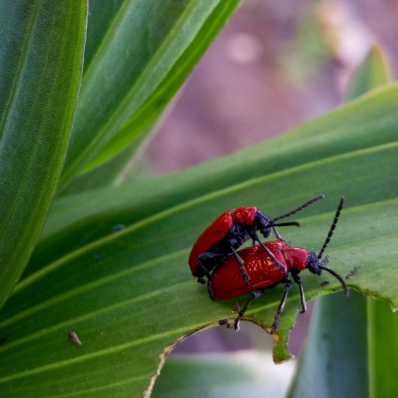 insect, animals in the wild, leaf, animal themes, one animal, green color, close-up, no people, animal wildlife, day, red, nature, focus on foreground, outdoors, ladybug, plant, tiny