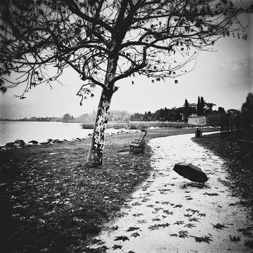 Epoca nuda // Water Tree Tranquil Scene Tranquility Nature Calm Lakeside Solitude Beauty In Nature No Love Hurts Tranquility Landscape Scenics Bare Tree Empty