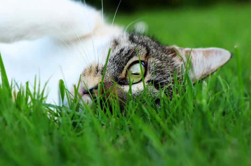 Close-up of a cat on field