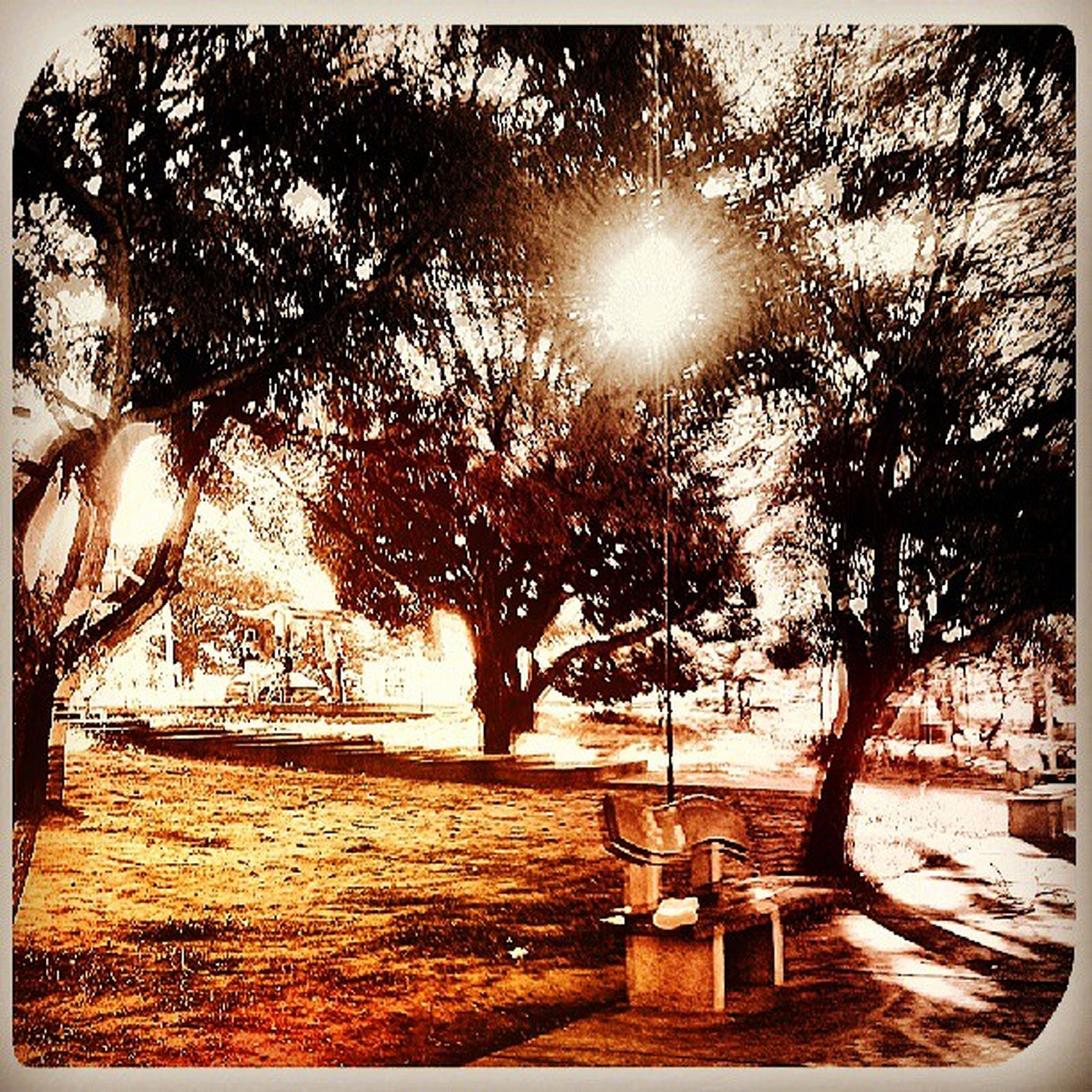 tree, transfer print, sunlight, sun, auto post production filter, tranquility, shadow, park - man made space, nature, branch, growth, tranquil scene, tree trunk, sunbeam, bench, scenics, beauty in nature, day, park, sunny