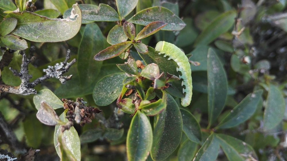 Snail Beauty In Nature Birds Catterpillar Green Color Leaf Nature No People