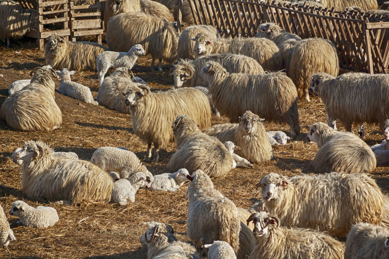 Sheep's Farm