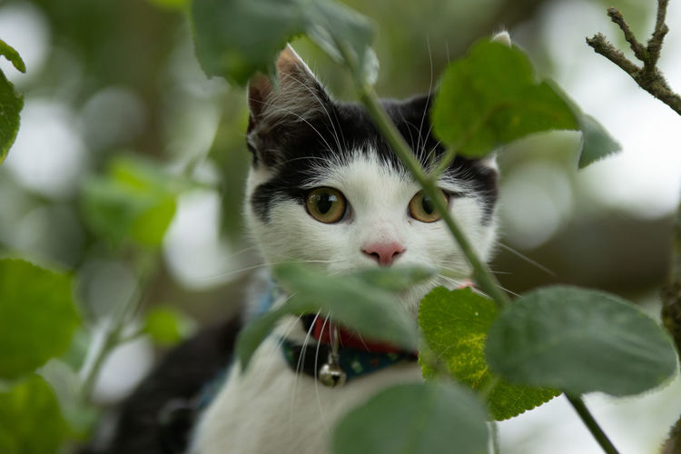 Animal Themes One Animal Mammal Animal Leaf Plant Part Cat Domestic Pets Domestic Cat Feline Domestic Animals Plant Vertebrate Green Color Selective Focus Animal Body Part Looking No People Nature Whisker Outdoors Animal Head
