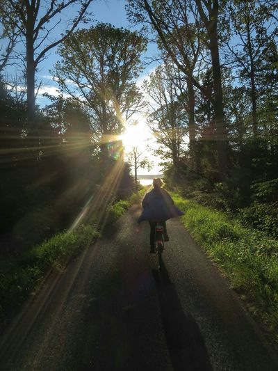 Towards The Light Cycling Road Forest Lake View Visingsö Rönäs Evening Sky