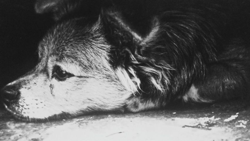 One Animal Dog Pets No People Day Nature Domestic Animals Sadness😢 Love♡ Puppy Fragility Black And White Photography Nature