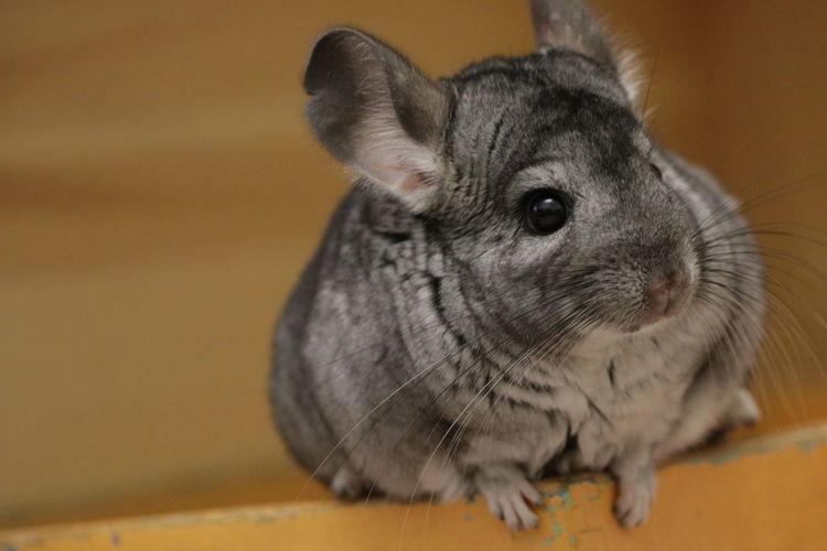 Close-up of a rabbit looking away