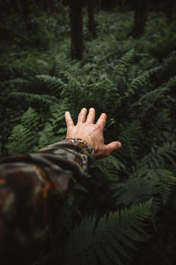 Close-up of human hand against plants in forest