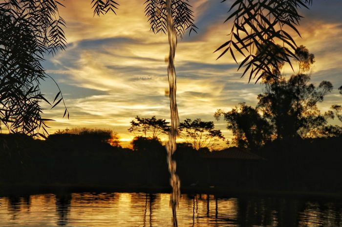 Arapongas Paraná EyeEmNewHere Hanging Andreza Andrezaolv Water Tranquility Tree Palm Tree Reflection Sunset Silhouette Cloud - Sky Lake Sky Nature Tranquility Outdoors Scenics No People Landscape Beauty In Nature Vacations Travel Destinations