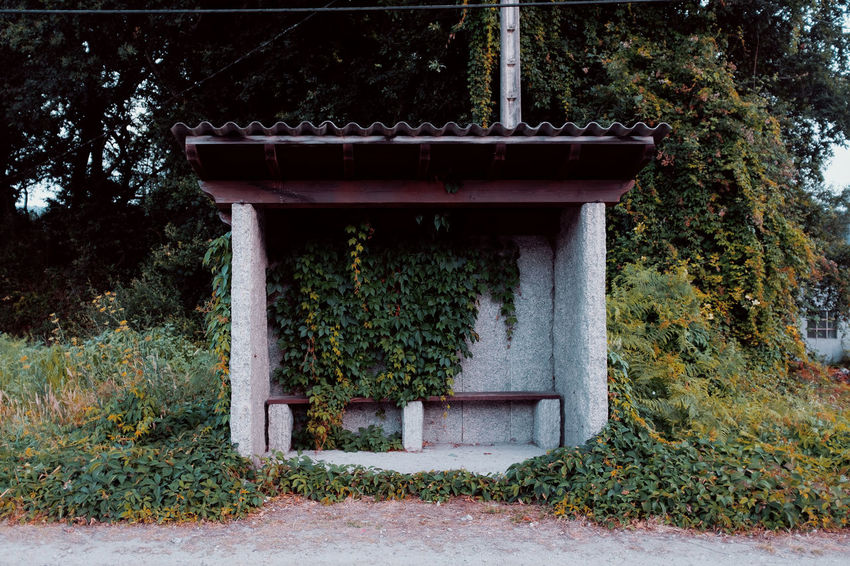 LOST IN GALICIA 🚌 Lostingalicia Threeweeksgalicia Architecture Plant Built Structure Day Tree Nature Outdoors Growth No People Entrance Door Building Exterior Forest Land Building Green Color House Park Plant Part Footpath Architectural Column Hedge
