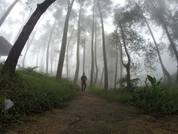 under the fog Travel Travelling Adult Beauty In Nature Day Fog Forest Full Length Growth Land Leisure Activity Nature One Person Outdoors Plant Real People Rear View Tranquility Travelphotography Tree Walking WoodLand