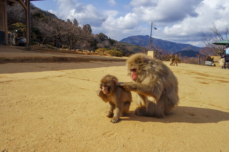 Monkey parents and children Photography Photograph Photo Travel Photography EyeEm Best Shots EyeEm Getty Images Monkey Japan Kyoto Scenery View Mammal Outdoors Animal Themes Day Sky Mountain No People Nature