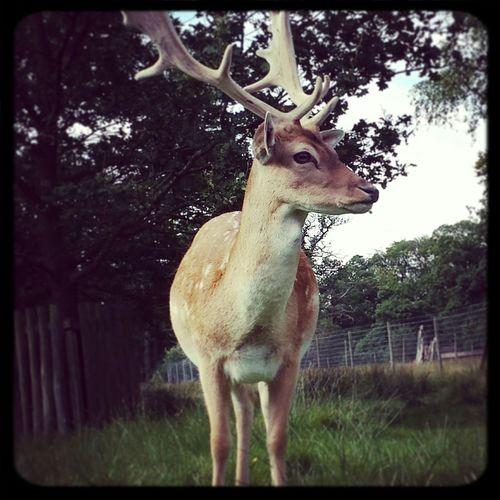 Deer Sanctuary Amazing Creatures Nature