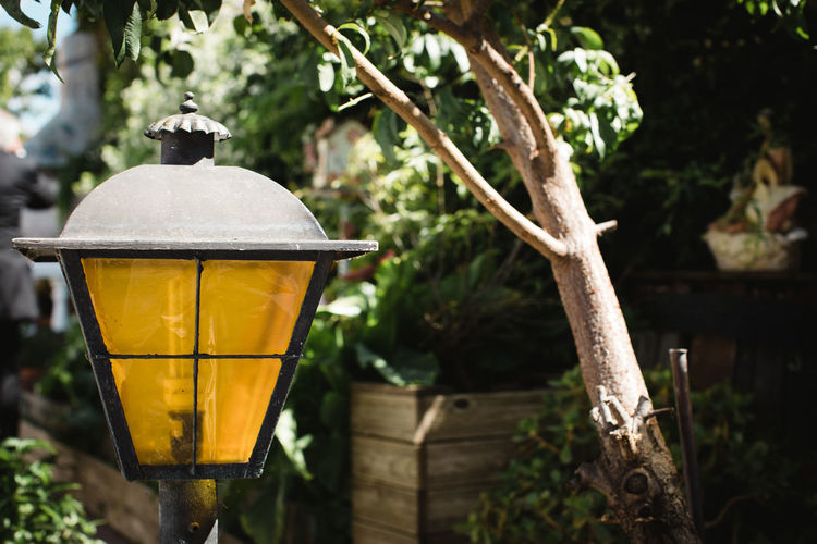Focus On Foreground Plant No People Day Tree Lighting Equipment Nature Close-up Outdoors Growth Wood - Material Front Or Back Yard Food And Drink Branch Household Equipment Yellow Freshness Plant Part Leaf Lantern Electric Lamp