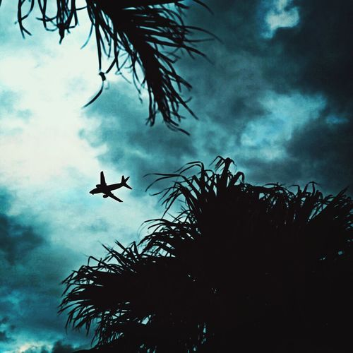 Silhouette Flying Low Angle View Tree Cloud - Sky Outdoors Sky Day No People Vulture Palm Tree Nature Spread Wings Storm Cloud Airplane Airplane In The Sky Okinawa Beauty In Nature Nature Tree Low Angle View Silhouette 宮古島 沖縄 Miyako