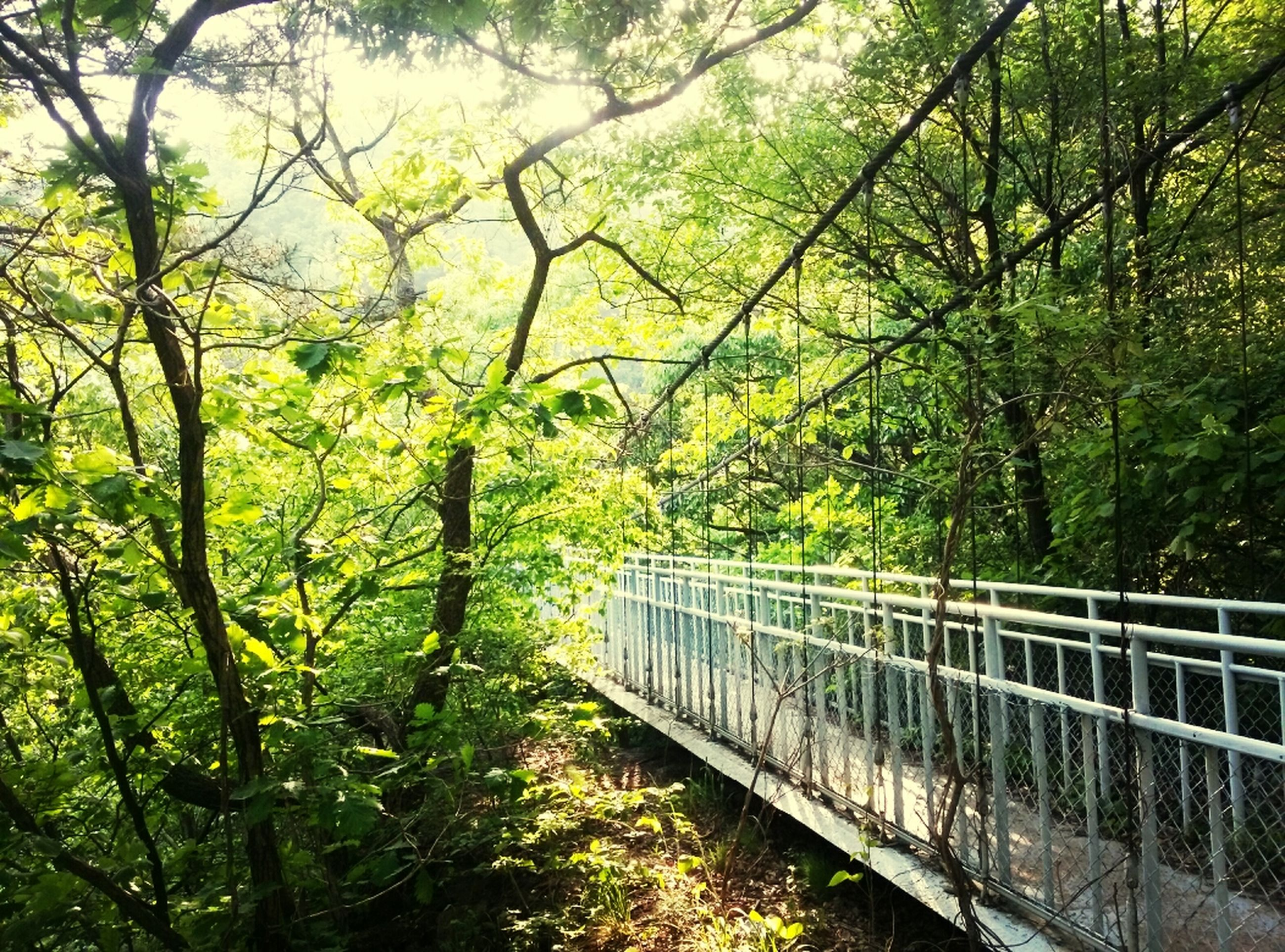 tree, growth, branch, green color, railing, fence, nature, forest, built structure, tranquility, day, architecture, connection, outdoors, lush foliage, no people, beauty in nature, bridge - man made structure, sky, plant