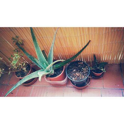 Redink Plants Green Home garden art artistic artisticphoto nice cute beauty colorless instagramers instamoment instapic instacolor followforfollow follow4follow like4like