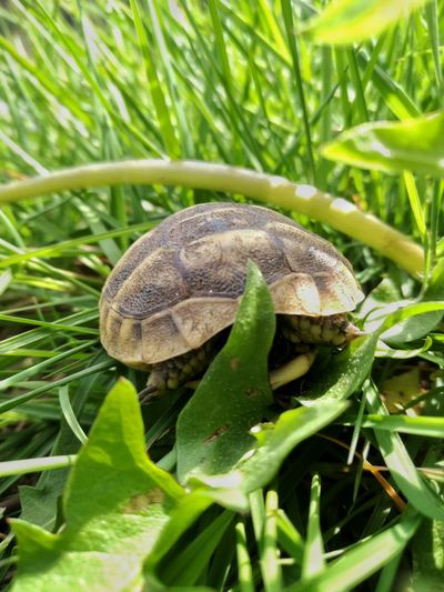 One Animal Animal Wildlife Green Color Nature Grass Close-up Outdoors Day Animals In The Wild Reptile Leaf No People Animal Themes Turtle Little Turtle Wildlife Wildlife & Nature