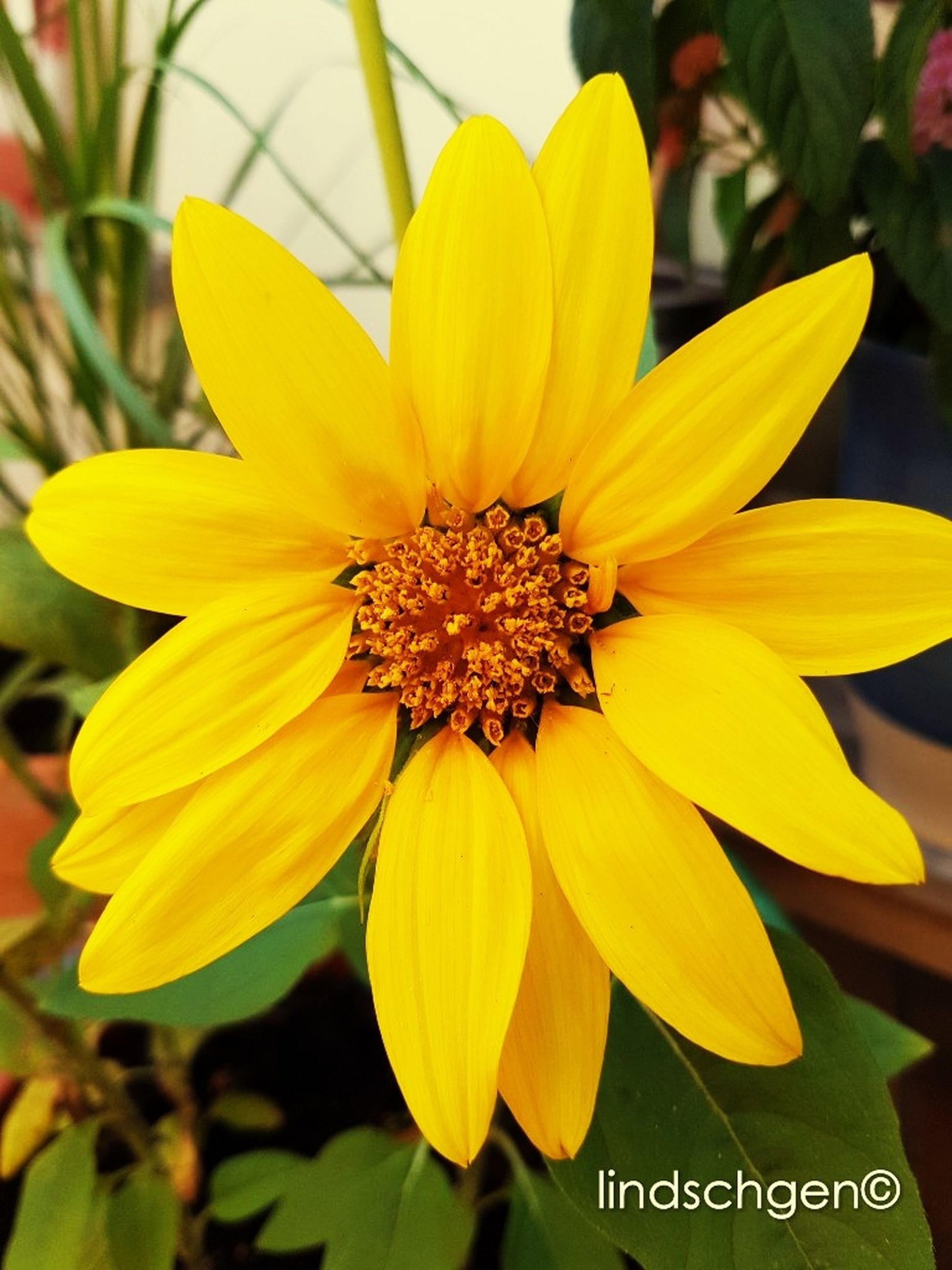flower, petal, yellow, fragility, flower head, beauty in nature, freshness, growth, nature, pollen, close-up, blooming, day, plant, outdoors, no people
