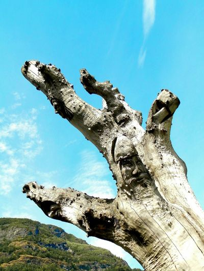 Flåm Norway Tree_collection  Tree Art Man In The Tree Hand Fantasy Albero I See Faces Nature Is Art Perspectives On Nature