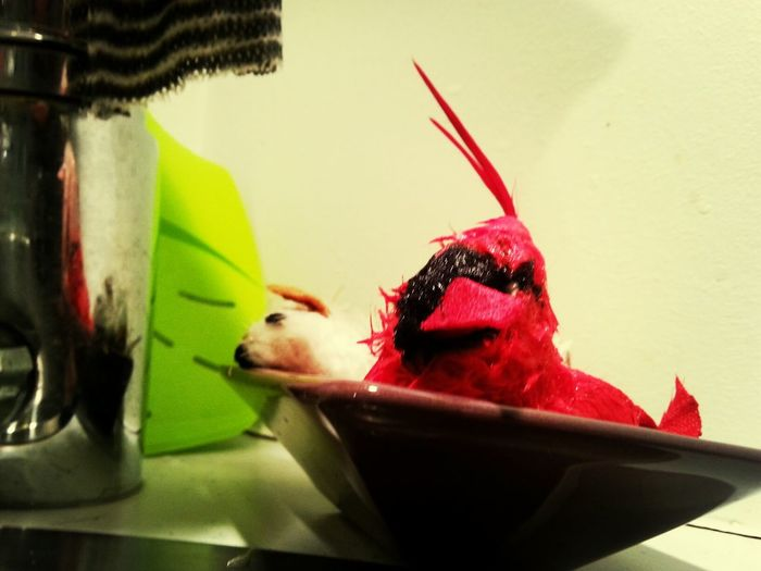 my cat toys. washed again. the bitd is no longer tweeting... Cat Toys