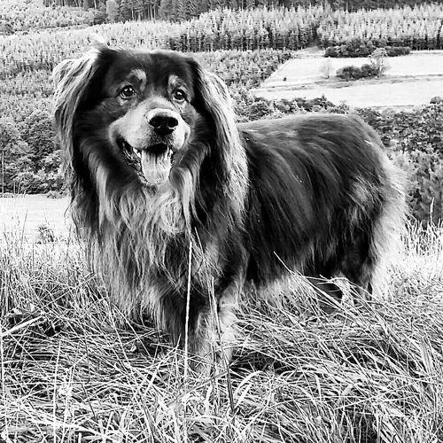 Service Animals Bestdogever bester Beschützer ❤🐶❤ Iggermany Black And White Blackandwhite Blackandwhite Photography… aber auch ein großer Schisser...hat großen Respekt vor 🐰🐱🐮🐴🐂🐃🐇🐘⛄ und er liebt ⚽🎾🍔🍕🍗🍖🍩🍪🐶🐾🐩🌞🚗 Lovemydog