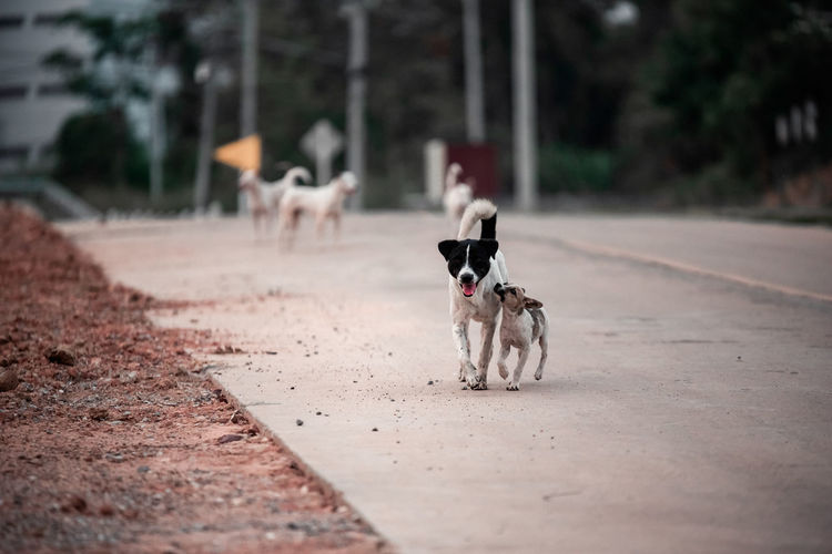 Dog on the road